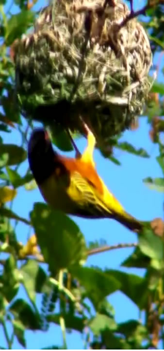 Kiboko -Bay-Bird-Life-003