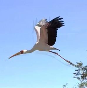 Kiboko -Bay-Bird-Life-006