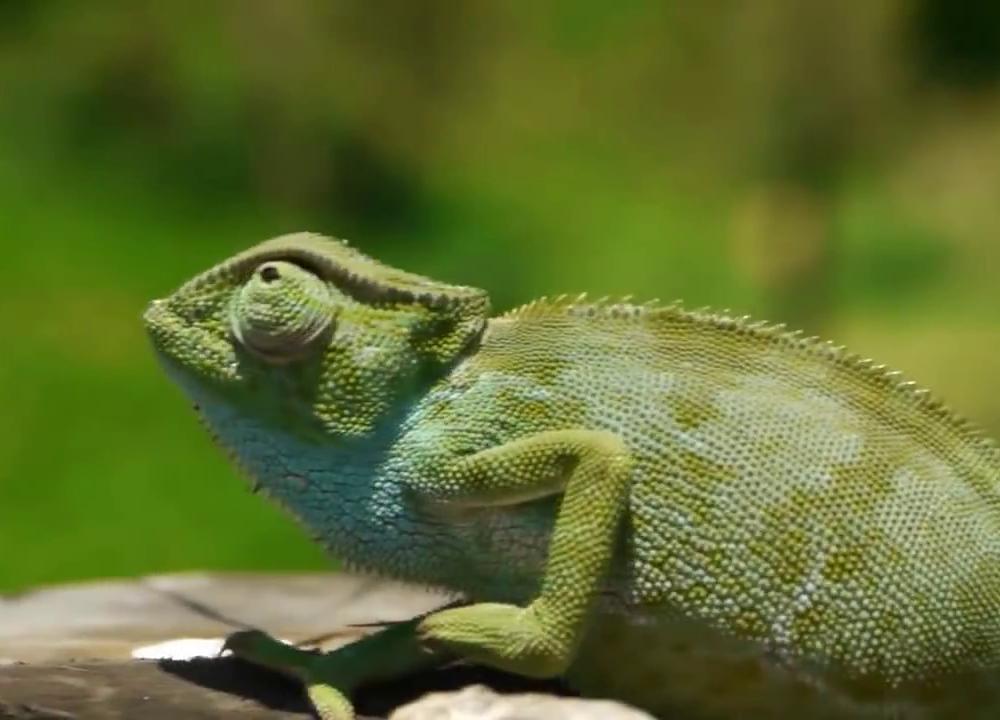 Kiboko-Bay-Fauna