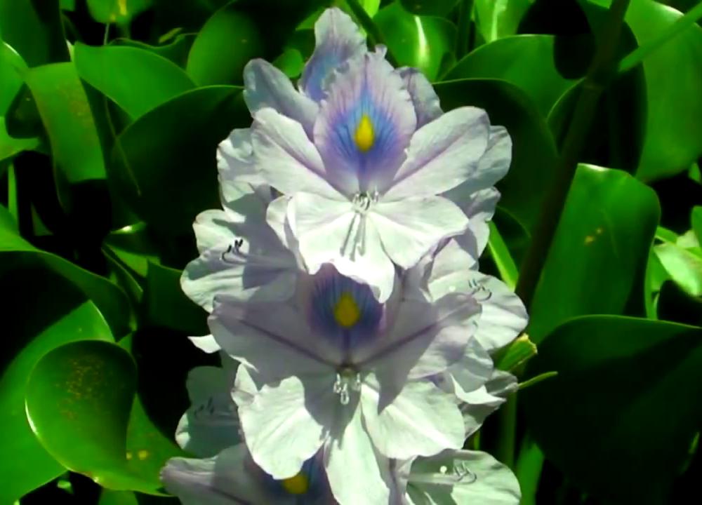 Kiboko-Bay-Flora